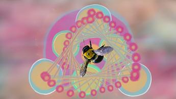 Bee_Still