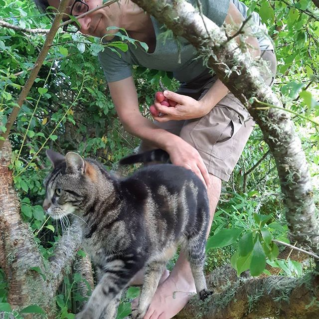 A cat and a man in a plum tree